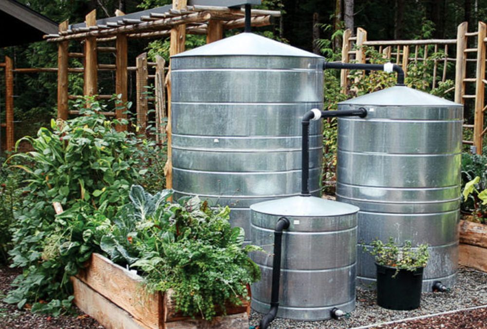 Going Green While Keeping Your Garden Green
