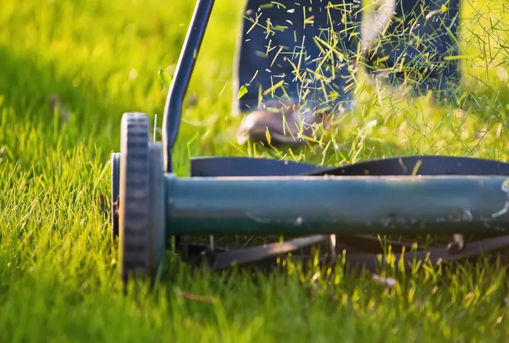 Avoid Grass Problems With Proper Mowing Knowhow