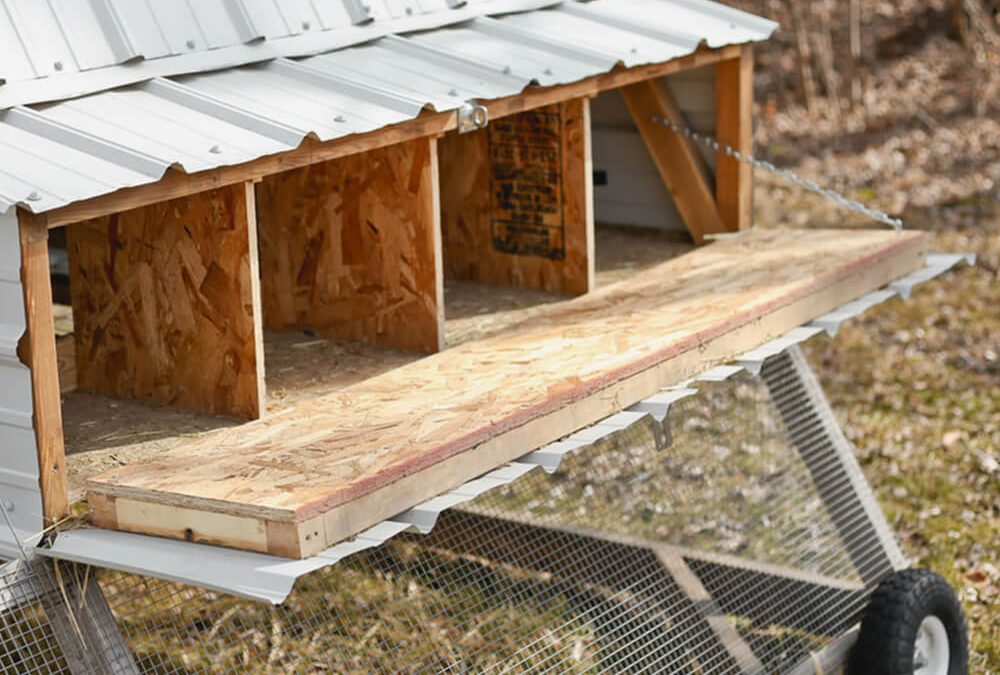 Chicken Nesting Boxes: Proper size and placement