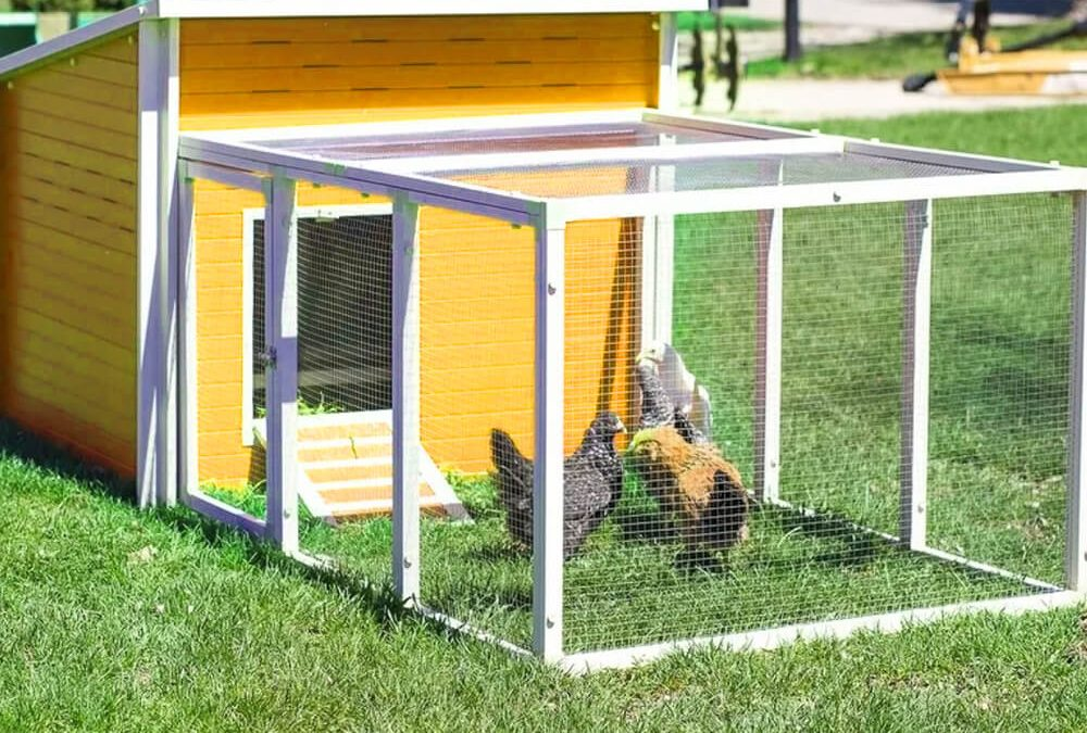 Chicken Pens – Which One is Right For You?