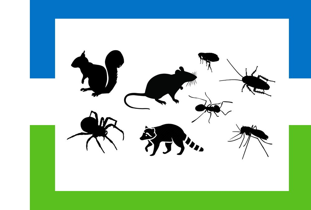 Common Animal Pests in the Garden