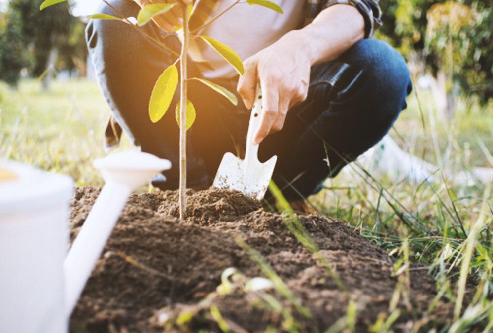 Essentials of Home Gardening