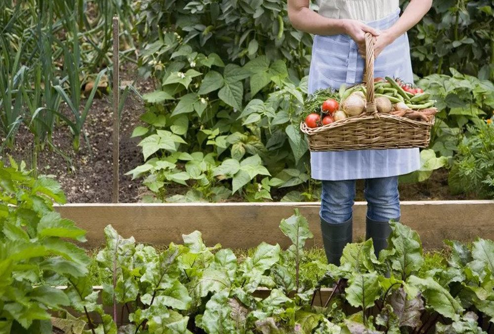 Homesteading Skills to Learn