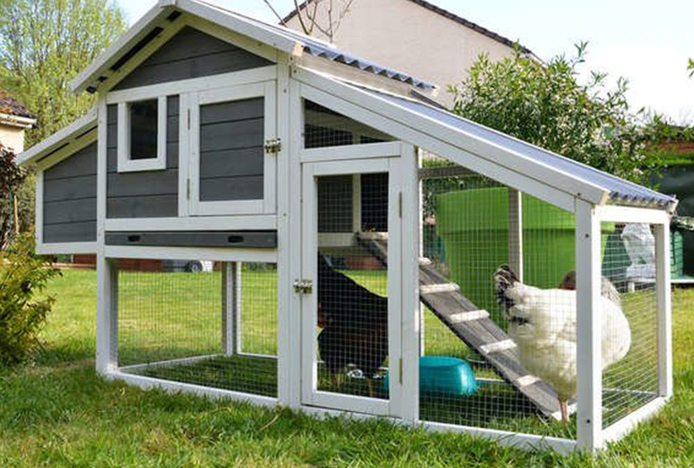 Building a Hen House- Coop Building Tips