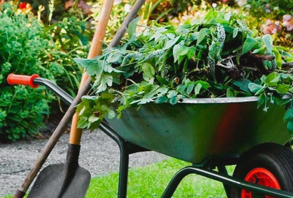 How To Clean Up An Overgrown Yard