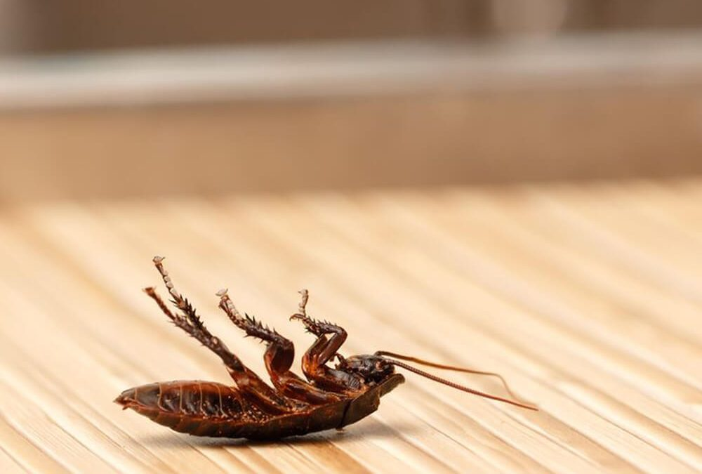 How to Deal with Cockroaches in Your Home