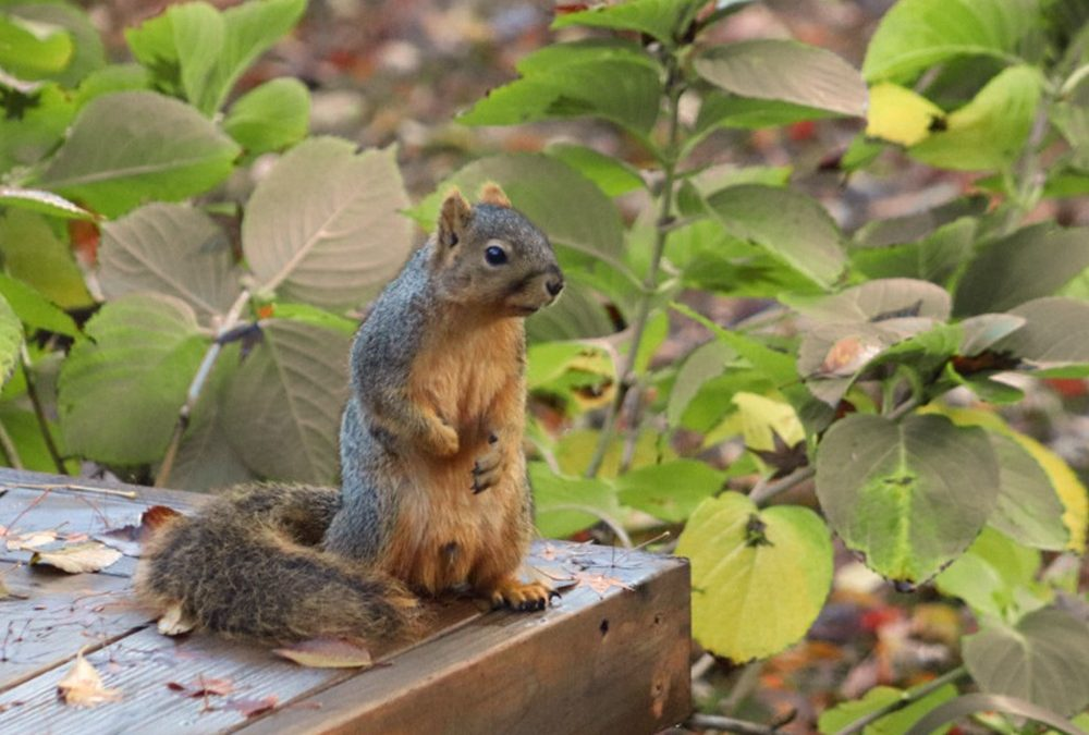 How to Safely and Naturally Repel Squirrels from Your Yard