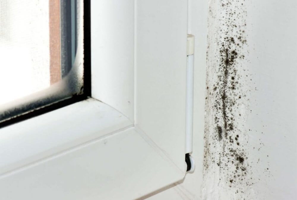 Molds: Is There An Enemy Lurking in Your Home?