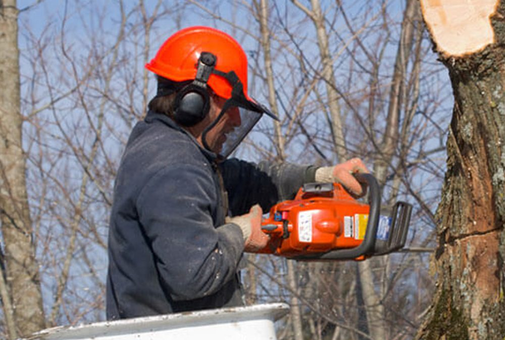Removing Trees From a Heavily Wooded Lot
