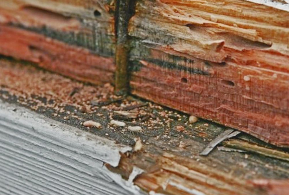 Termite Prevention Tips For the Homeowner