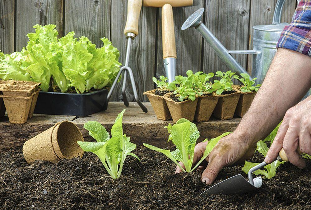 Tips to a Successful Garden